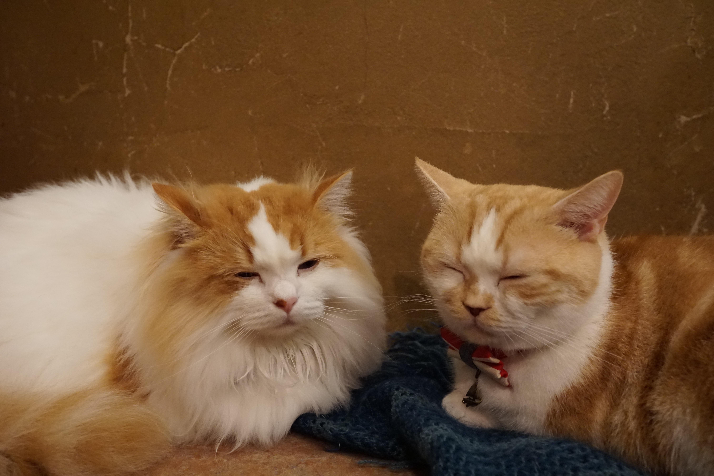 【猫カフェ】てまりのおうち その2【カメラ】