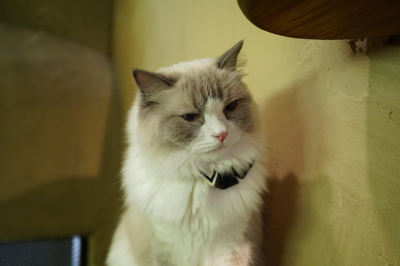 【猫カフェ】てまりのおうち その1【カメラ】