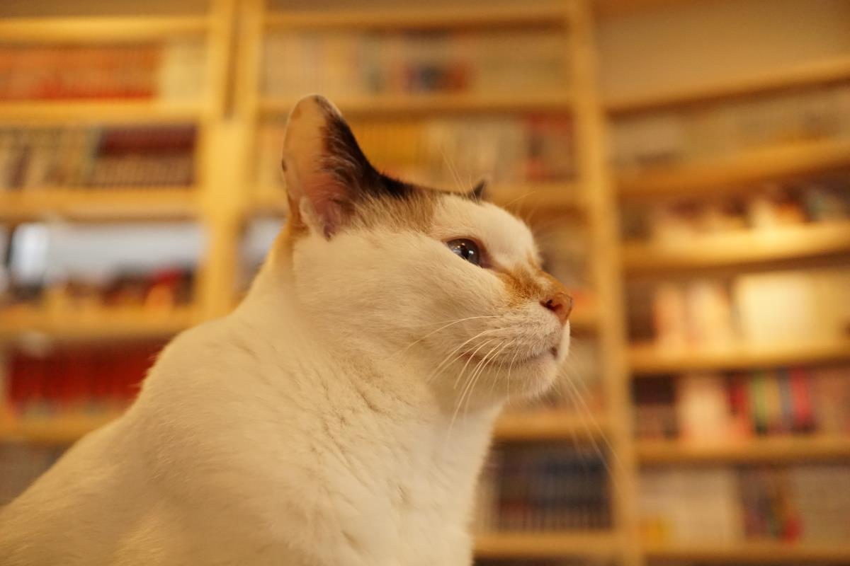 猫喫茶 ねこのみせ(東京都町田市)