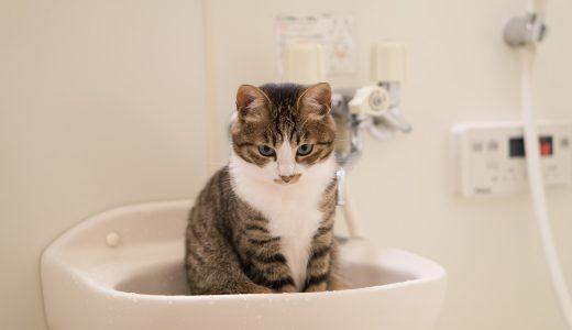 おしゃれな入浴剤より、結局こっち